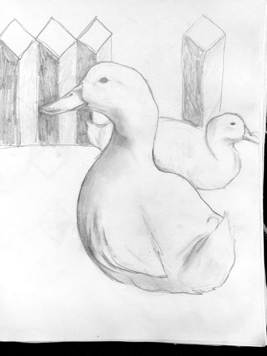 Ducks Sketch For Upcoming Painting