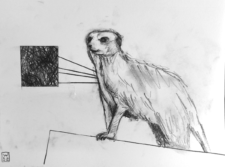 Meerkat 1 Original Drawing
