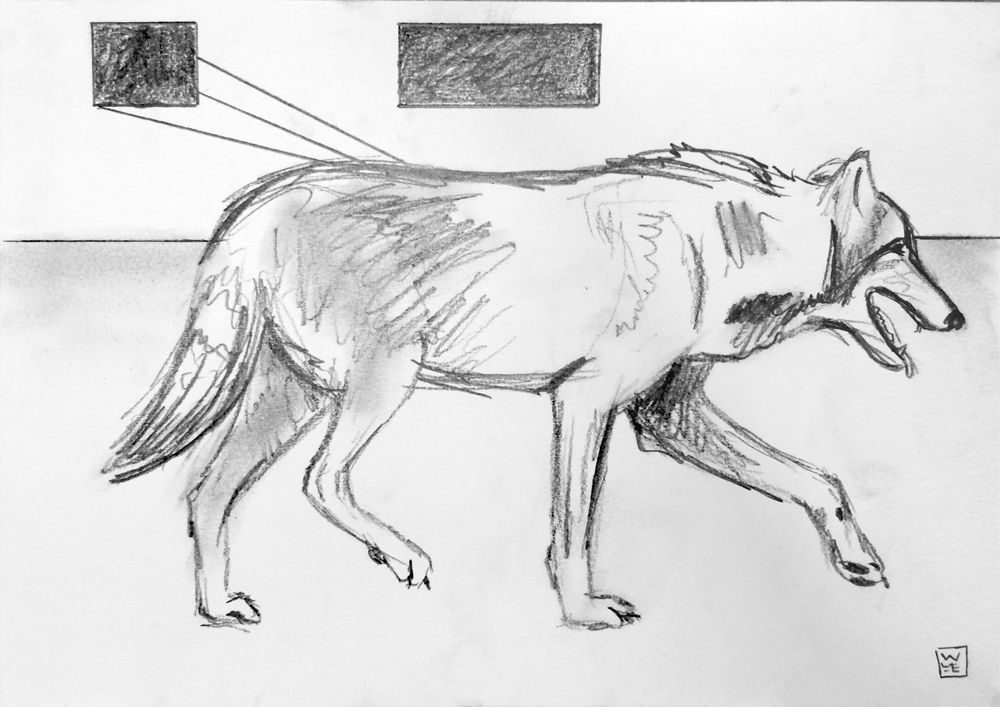 Wolf S Bane Animal Art Drawing Will Eskridge