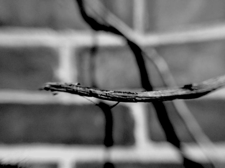 Twig Haiku Will Eskridge