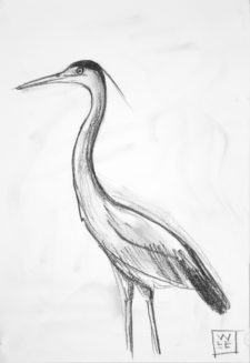 Great Blue Heron Graphite Drawing