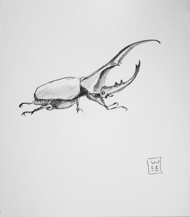 hercules beetle graphite drawing will lineberger eskridge