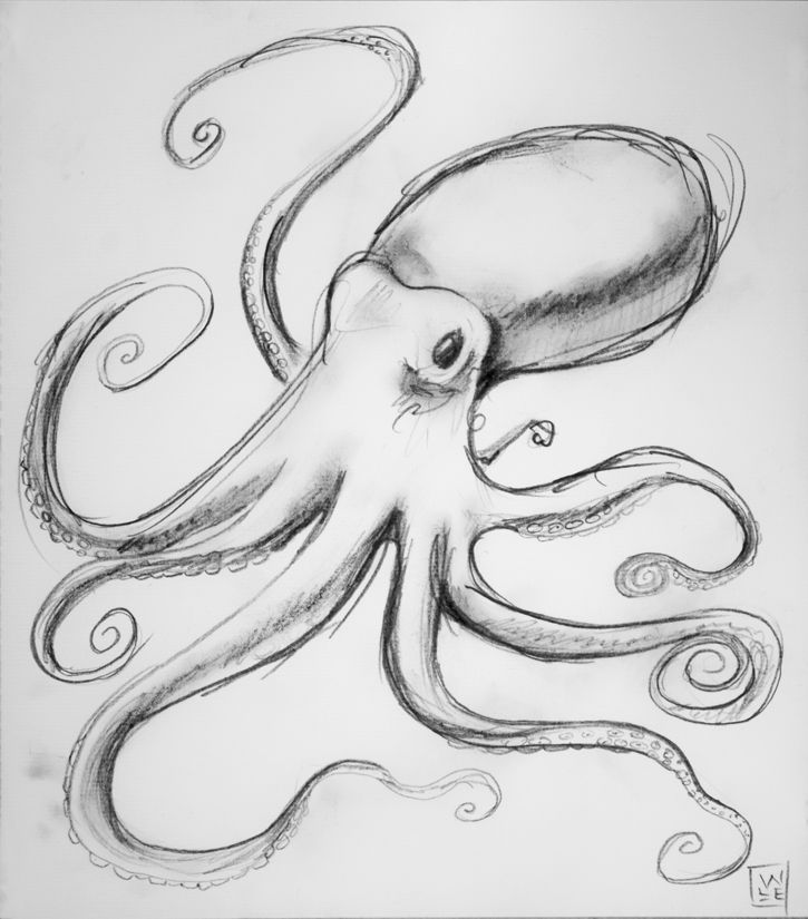 octopus animal art drawing will eskridge