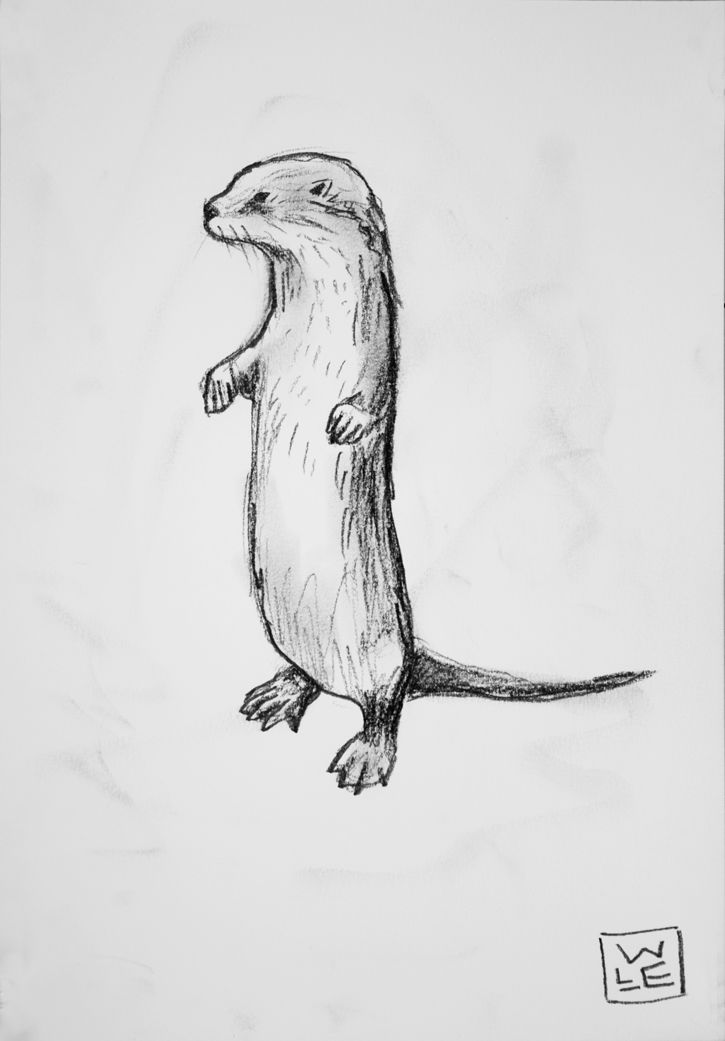 Otter Animal Art Drawing Will Eskridge