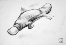 Platypus Graphite Drawing