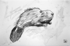 Beaver Graphite Drawing