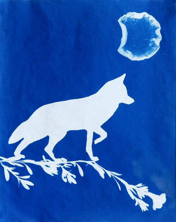 Canis Waning animal artist art cyanotype photogram Will Eskridge