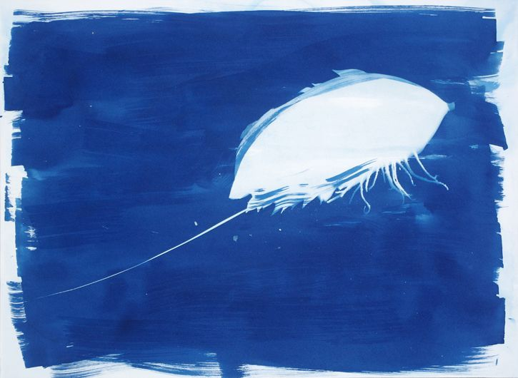 Deep Blue Limulus Animal Artist Art Cyanotype Photogram Will Eskridge