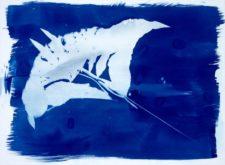 Deep Blue Manta Print