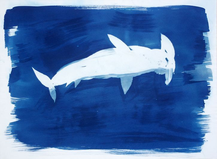 Deep Blue Sphyrna Animal Artist Cyanotype Photogram Will Eskridge